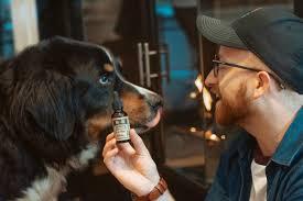 Essential Cbd Extract For Pets - composition - avis - forum - temoignage